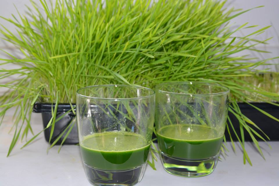 Comment faire pousser de l 39 herbe de bl en 5 tapes simples vitaality jus de fruits frais - Faire des jus de legumes ...